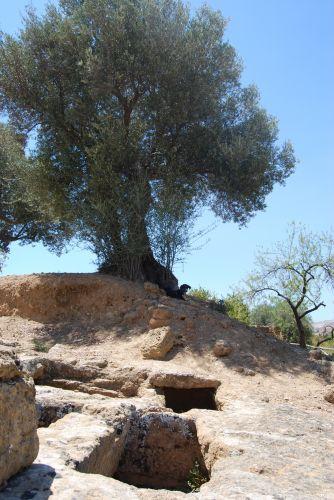 Zdjęcia: AGRIGENTO, SYCYLIA, Na straży katakumb, WłOCHY