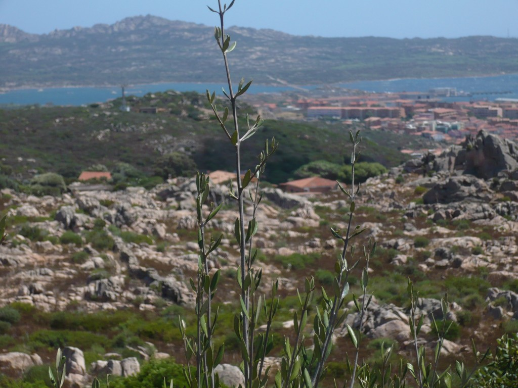 Zdjęcia: Okolice Olbii, Sardynia, Karajobraz Sardynii, WłOCHY