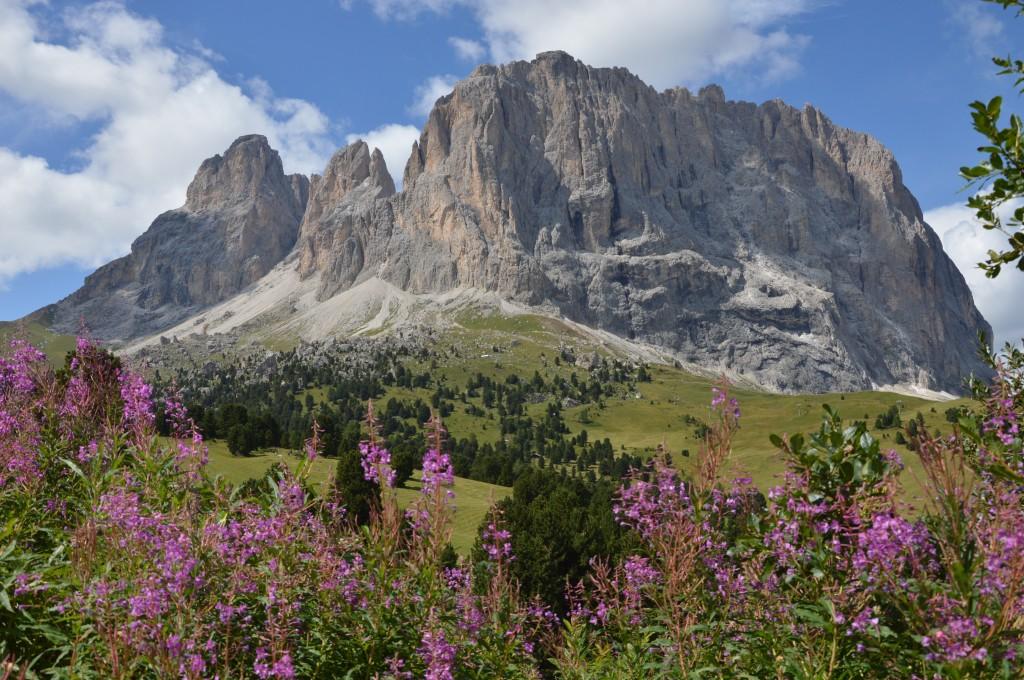 Zdjęcia: Passo di Gardena, Dolomity, kwiaty, WłOCHY