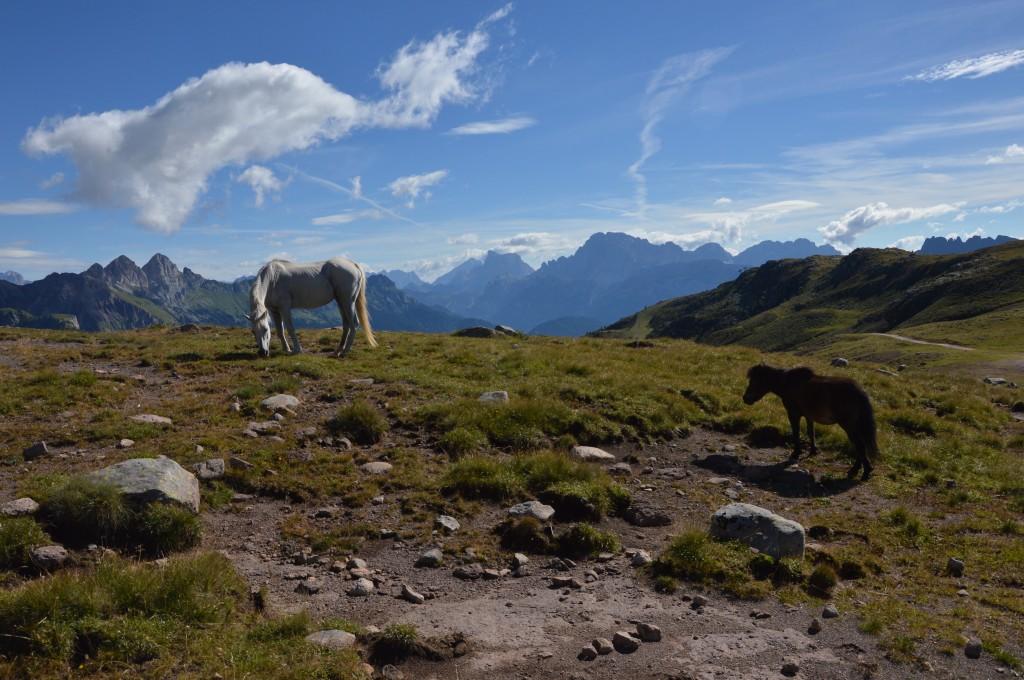 Zdjęcia: Santa Margeritta, Dolomity, dzikość, WłOCHY