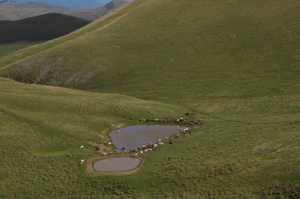 Zdjęcia: Campo Imperatore, Abruzja, mućki, WłOCHY