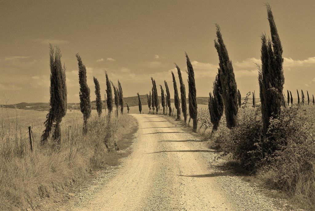 Zdjęcia: Okolice Pienzy, Toskania, Toskania, WłOCHY