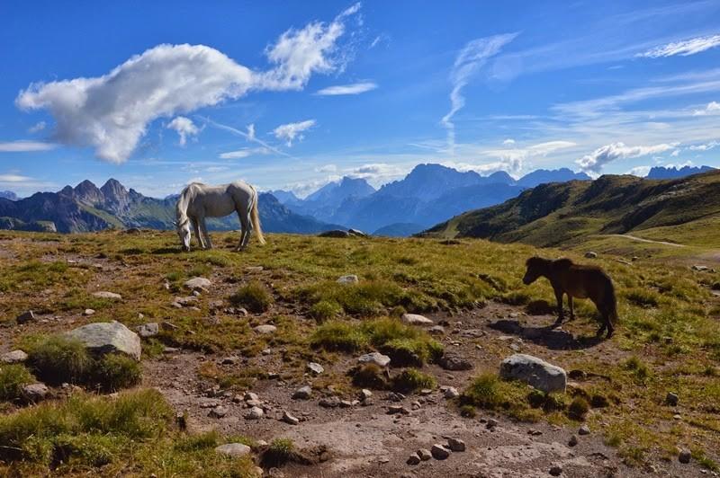 Zdjęcia: Santa Margeritta, Dolomity, dzikie konie, WłOCHY