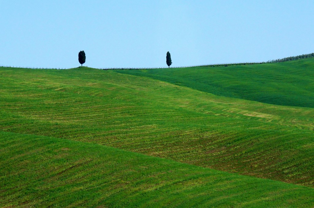 Zdjęcia: Toskania, Toskania, Toskańskie pola, WłOCHY