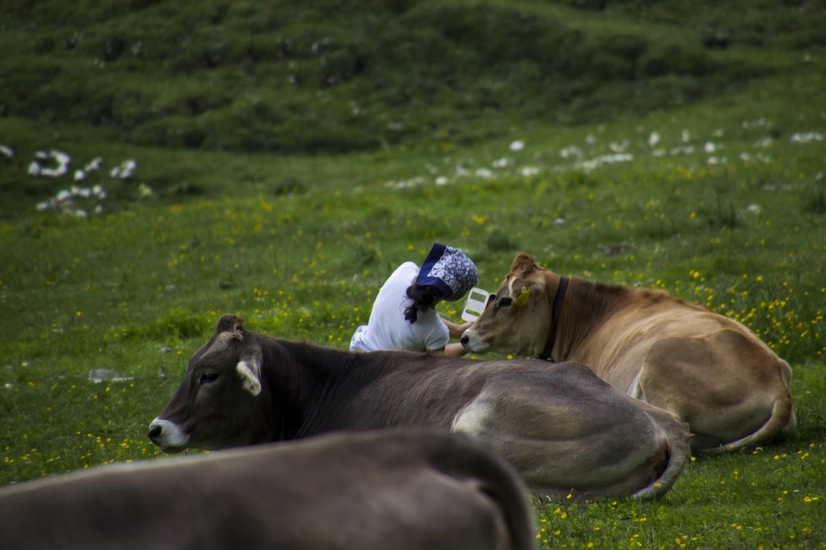 Zdjęcia: Tre Cime di Lavaredo, Dolomity, selfie selfie :), WłOCHY