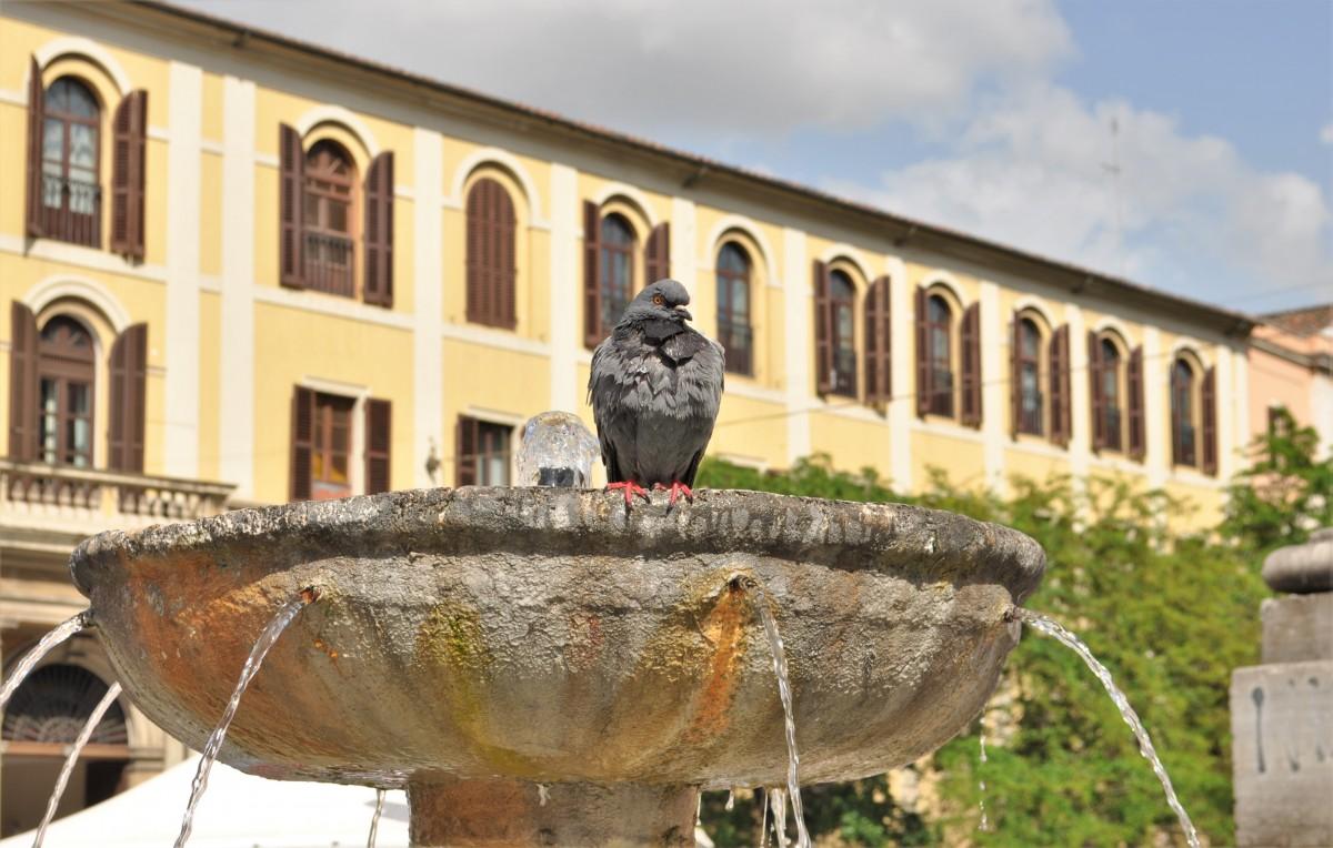 Zdjęcia: Rzym, Lazio, Rzym, Plac Santa Maria Maggiore, WłOCHY