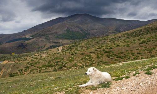 Zdjęcie WłOCHY / Gran Sasso dItalia / Okolice Monte Lenca / Apeniński pasterz