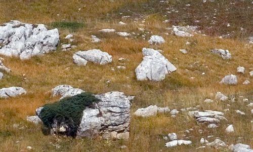 Zdjęcie WłOCHY / Gran Sasso dItalia / Dolina Arno, Apeniny / Apeniński niedźwiedź II