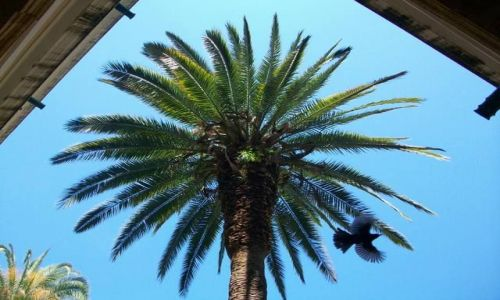 WłOCHY / Sycylia / Trapani / Palma z ptakiem