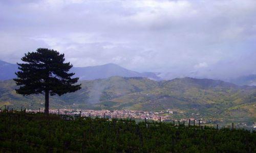 Zdjecie WłOCHY / Sycylia / Etna / winnica Gambini na stoku Etny
