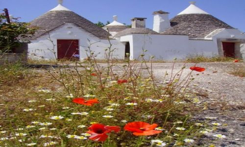 Zdjecie WłOCHY / Apulia / mała wioska po drodze /  polne kwiaty  i mały,biały domek ...