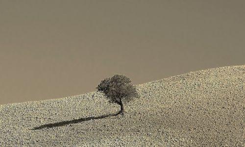 Zdjęcie WłOCHY / Toskania / Okolice Pienzy / Samotność