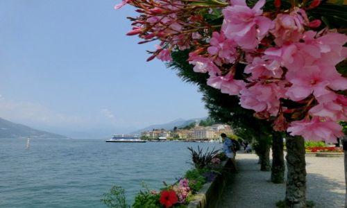 Zdjęcie WłOCHY / Lombardia / Jezioro Como / oleandry w Bellagio