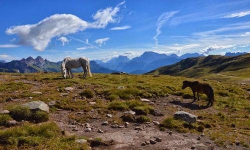 Zdjecie WłOCHY / Dolomity / Santa Margeritta / dzikie konie