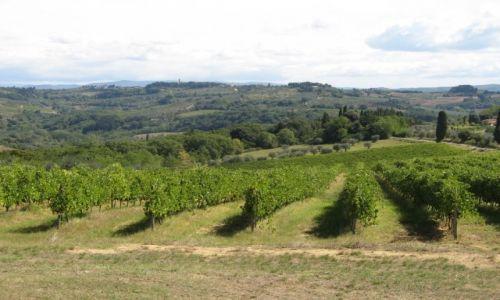 Zdjecie WłOCHY / Toskania / Sam Gimigiano / Winnice w Toskanii