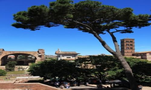 Zdjęcie WłOCHY / Rzym / Forum Romanum / Drzewo