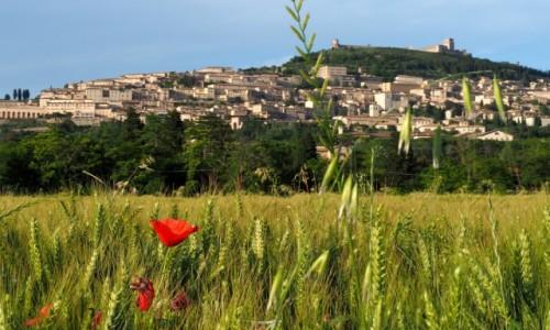 Zdjecie W�OCHY / Umbria / Asy� / Asy�
