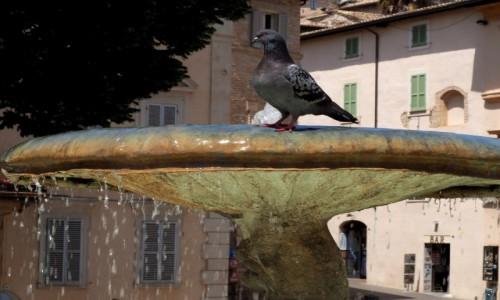Zdjęcie WłOCHY / Umbria / Asyż / Fontanna