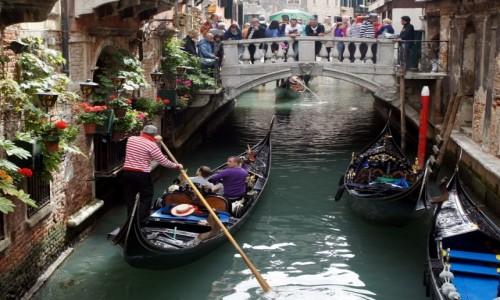 Zdjęcie WłOCHY / Wenecja Euganejska / Wenecja  / Jedni pracują, inni obserwują