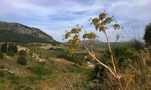 Zdjecie WłOCHY / Sycylia / Segesta / landschaft z ruinami w tle