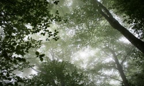 Zdjęcie WłOCHY / Sorrento / Monte Molare / Z głową w chmurach