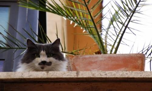 Zdjecie WłOCHY / Lazio / Włochy / rzymski kot :)