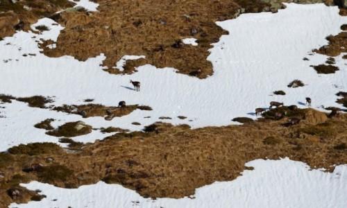 Zdjęcie WłOCHY / Trydent / Monte Zeledria / Znowu kozy... ;-)))