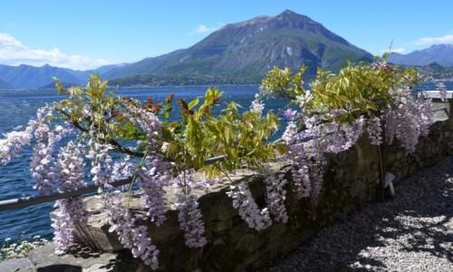 Zdjecie WłOCHY / Lombardia / Varenna / kwiatki muszą być...