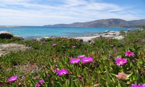 Zdjęcie WłOCHY / Sardynia / Spiaggia Su Bardoni / Liliowo i niebiesko - radośnie