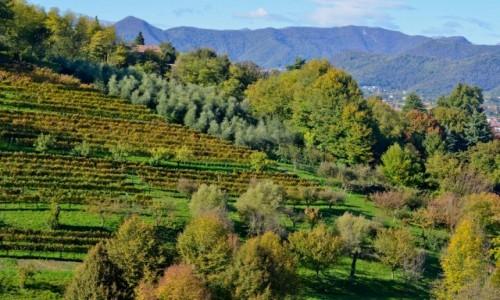 Zdjecie WłOCHY / Lombardia / Bergamo / Będzie wino