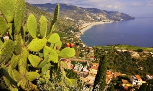 Zdjecie WłOCHY / Sycylia / Taormina / Opuncja