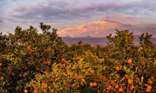 Zdjecie WłOCHY / Sycylia / Etna / Południowe słońce