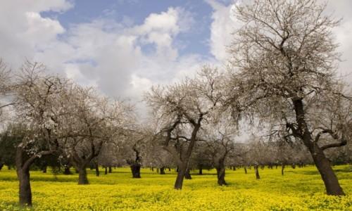 Zdjecie WłOCHY / Sycylia / okolica Katani  / Pomalowane na żółto i na niebiesko