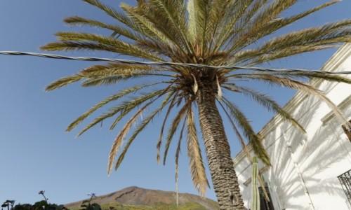 Zdjecie WłOCHY / wyspy eolskie / Stromboli / wulkan pod palmą