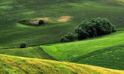 Zdjecie WłOCHY / Toskania / Okolice Pienzy / Toskania