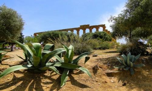 Zdjecie WłOCHY / Sycylia / Agrigento / Z podróży po Sycylii.