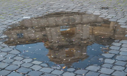 Zdjecie WłOCHY / Lacjum / Rzym / Piazza Navona