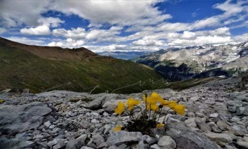 Zdjecie WłOCHY / alpy / Przełęcz Stelvio  ciut wyżej :) / gdzieś w górach