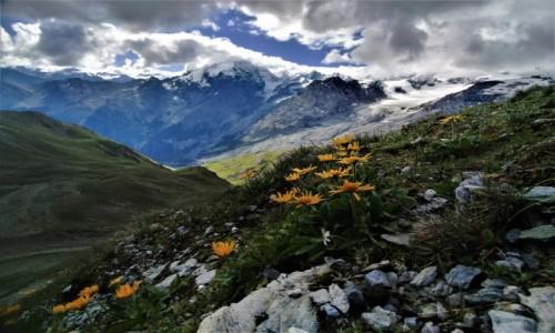 Zdjecie WłOCHY / alpy / Przełęcz Stelvio  ciut wyżej :) / kolory alp