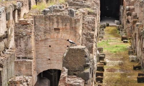 Zdjecie WłOCHY / Lazio / Rzym / Rzym, Koloseum