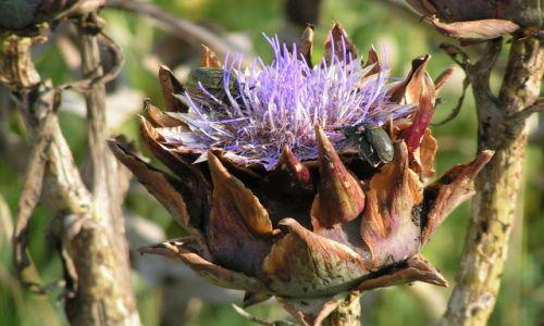 Zdjecie WłOCHY / brak / Elba / fauna i flora