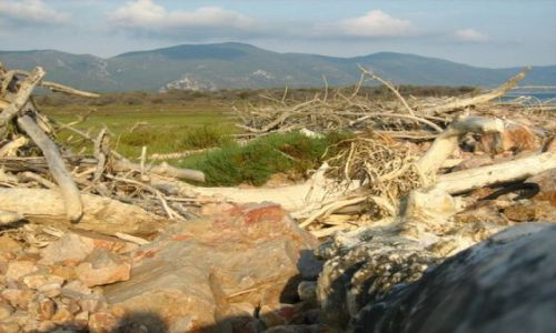Zdjecie WłOCHY / Toskania / parco Naturale della MAremma / dzikie plaze