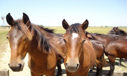 Zdjecie WłOCHY / Toskania / parco Naturale della MAremma / wild horses