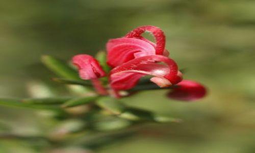 Zdjecie WłOCHY / Okolice Mediolanu / pełne roślin / Mam rogi jak baranek