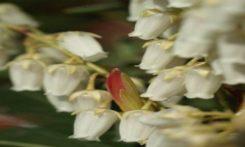 Zdjecie WłOCHY / Okolice Mediolanu / pełne roślin / A kto tu się wciska?