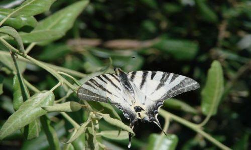 Zdjęcie WłOCHY / Abruzzo / Alba Adriatica / zwykly motyl europejski klasy sredniej