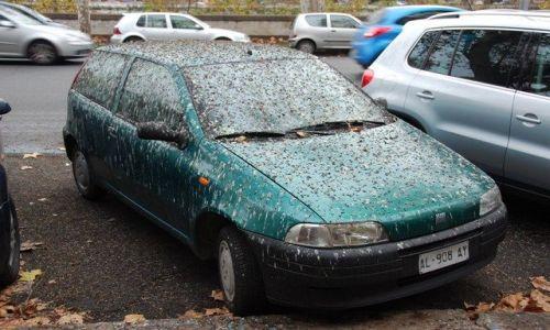 WłOCHY / Rzym / Zatybrze / ...zaparkował pod drzewem...