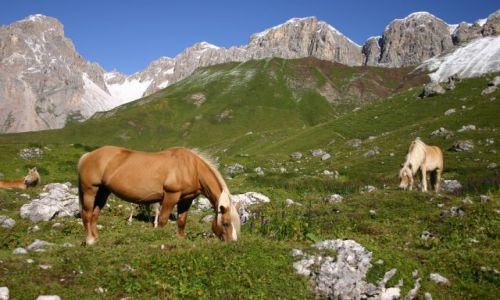 Zdjecie WłOCHY / Dolomity / Dolomity / koniki na alpejskich łąkach