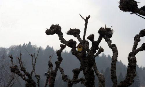 Zdjecie WłOCHY / Val di Sole / Paganella / domek dla ptaków