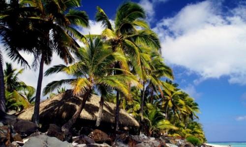Zdjęcie WYSPY COOKA / Zachód wyspy / Zachód  wyspy / Na urlopie